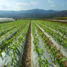 昌龙兴优质农用地膜PE地膜